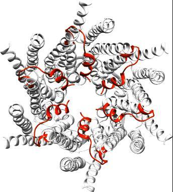 GJC3 gap junction proteins